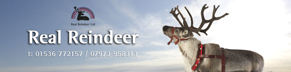 Real Reindeer Ltd
